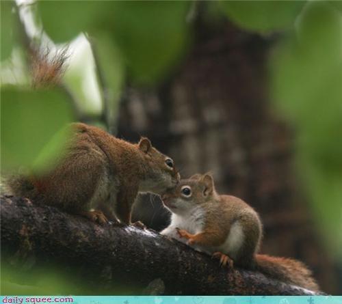 face KISS squirrel - 3516320256