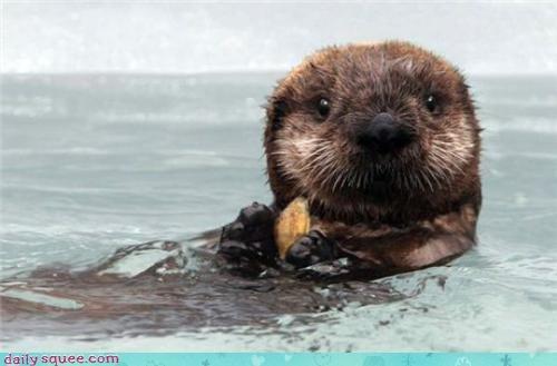 face noms otter - 3516321024