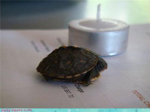 nerd jokes turtle - 3516324096