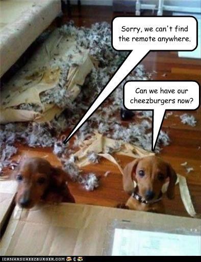 Cheezburger Image 3516584192