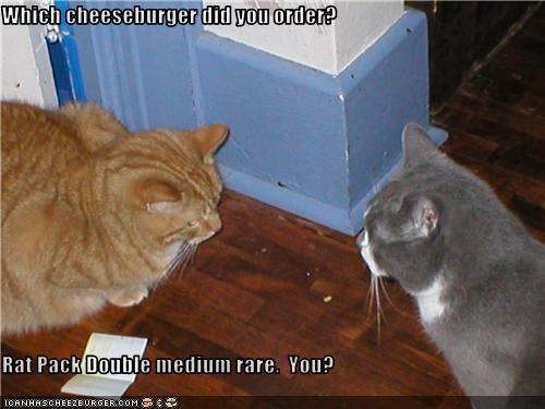Cheezburger Image 3516867840