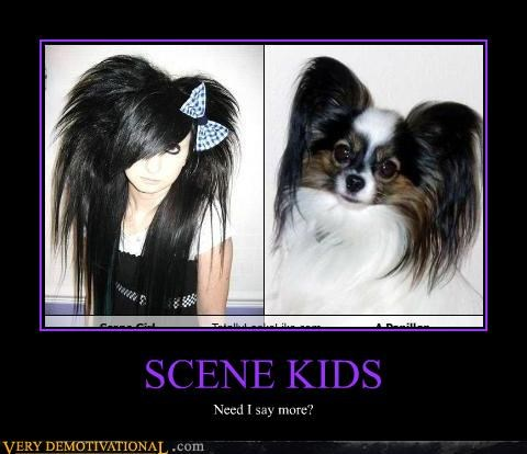 dogs,fashion,idiots,Mean People,mean to animals,puppies,scene kids,stupid hair