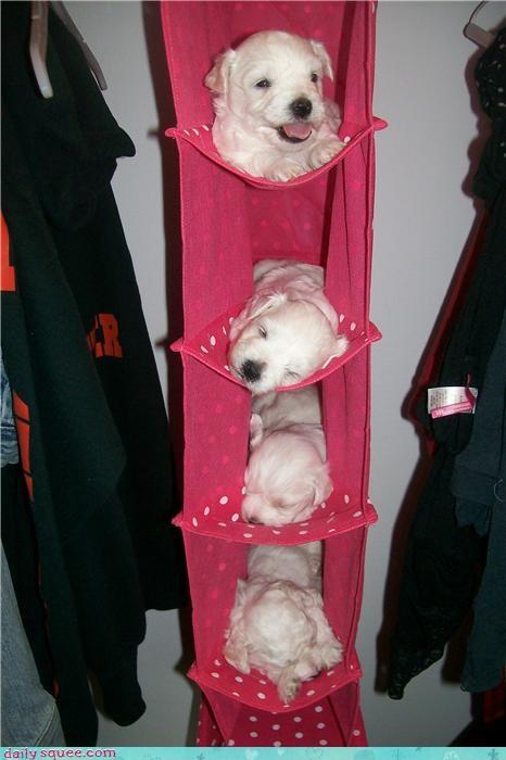 cute,dogs,puppy