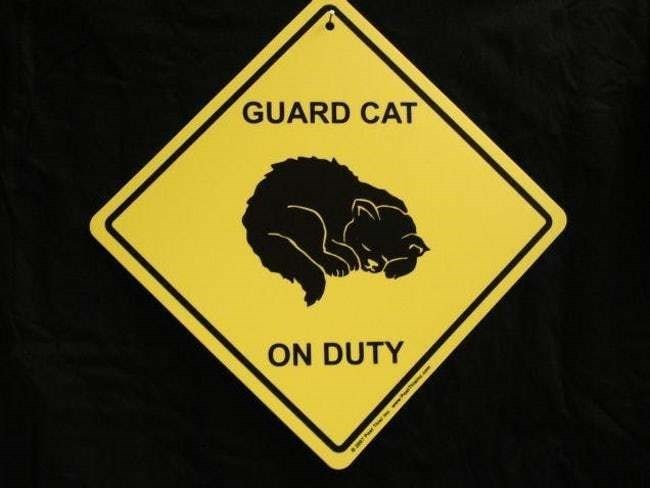 "funny ""beware of cat"" signs"