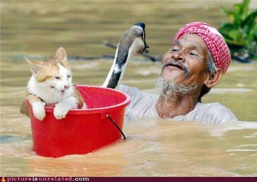 asia,bird,cat,loon,old man,water,wtf