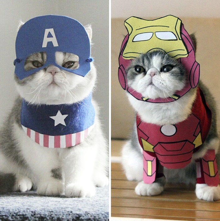 Cool cat costumes for Halloween