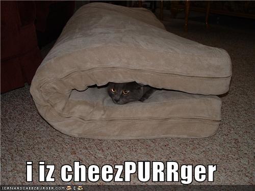Cheezburger Image 3518229760