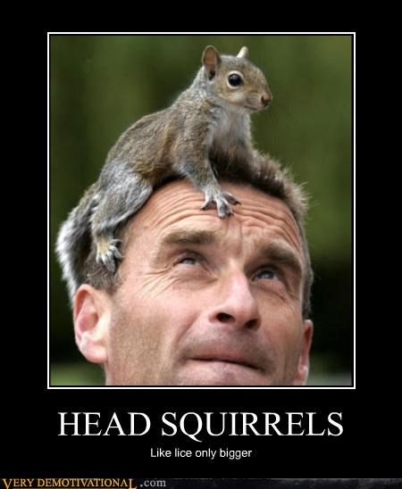 HEAD SQUIRRELS Like lice only bigger