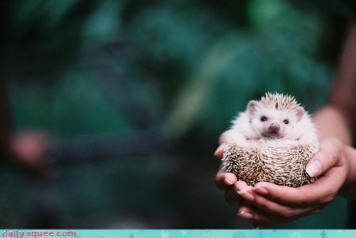 hedgehog hipster photography - 3518632960