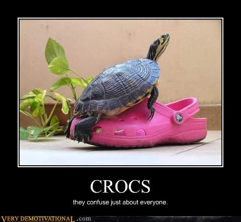 CROCS they confuse just about everyone.