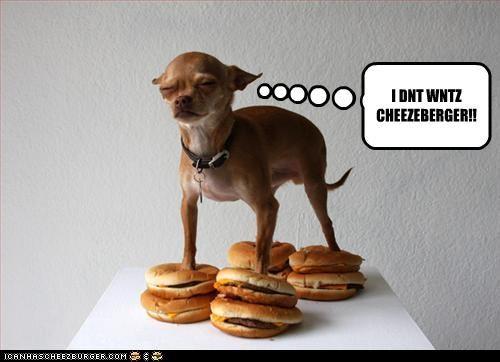 Cheezburger Image 3518808064