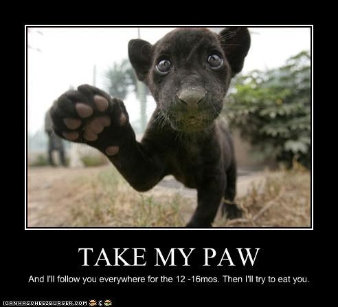 TAKE MY PAW And I'll follow you everywhere for the 12 -16mos. Then I'll try to eat you.