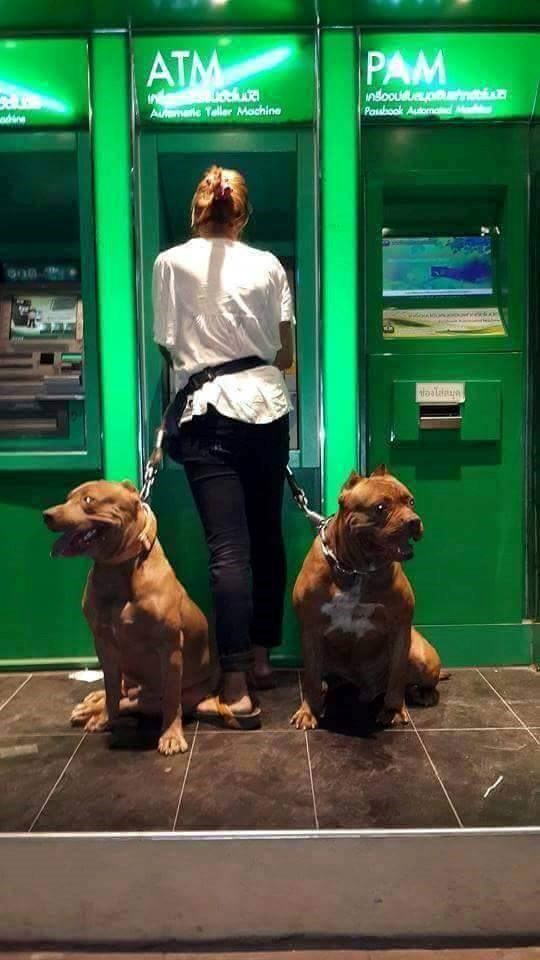 a funny list of people and their bodyguard dogs