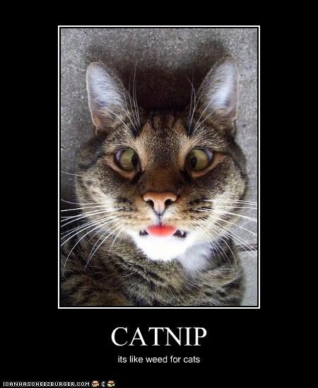CATNIP its like weed for cats