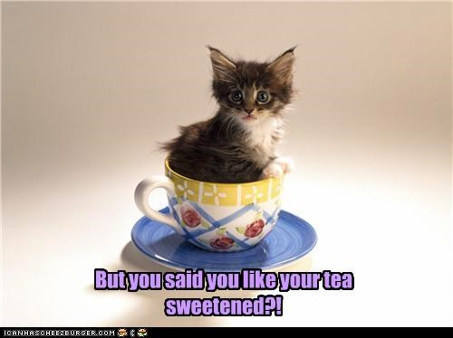but caption captioned cat confused kitten like literalism preference pun said sweet sweetened tea teacup you - 3520927232