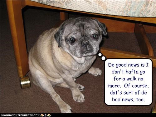 bad news,bathroom,good news,pug mix