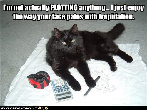 anything,basement cat,caption,captioned,cat,evil,faking,not,plotting,pretending,teasing