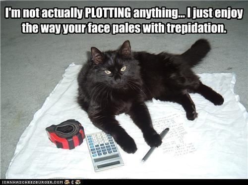 anything basement cat caption captioned cat evil not plotting pretending teasing - 3521152512
