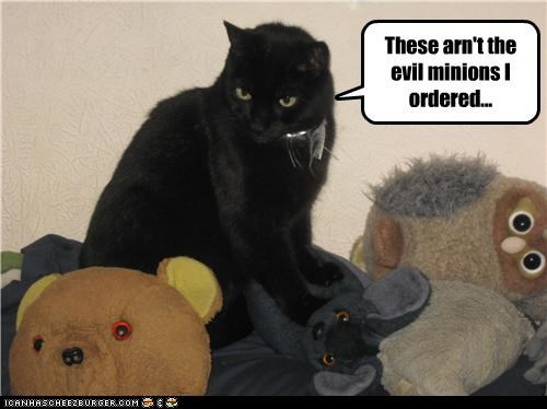 angry,basement cat,minions,stuffed animals