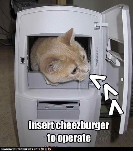 Cheezburger Image 3521956096