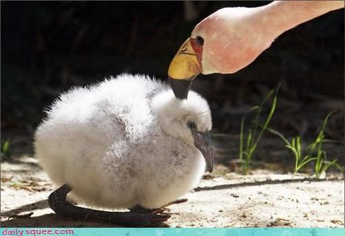 baby,bird,flamingo