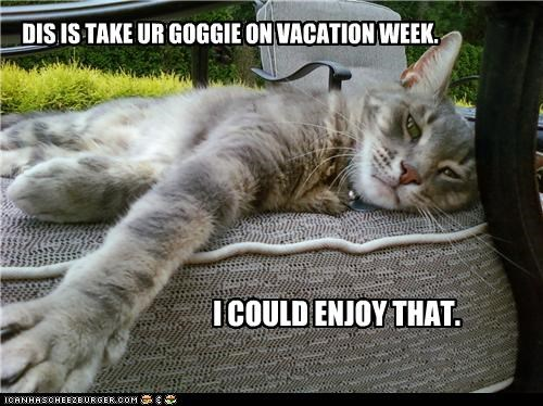 DIS IS TAKE UR GOGGIE ON VACATION WEEK. I COULD ENJOY THAT.