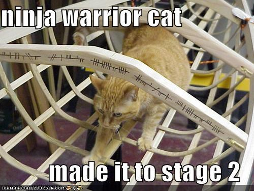 Ninja Warrior Cat Made It To Stage 2 Cheezburger Funny Memes Funny Pictures