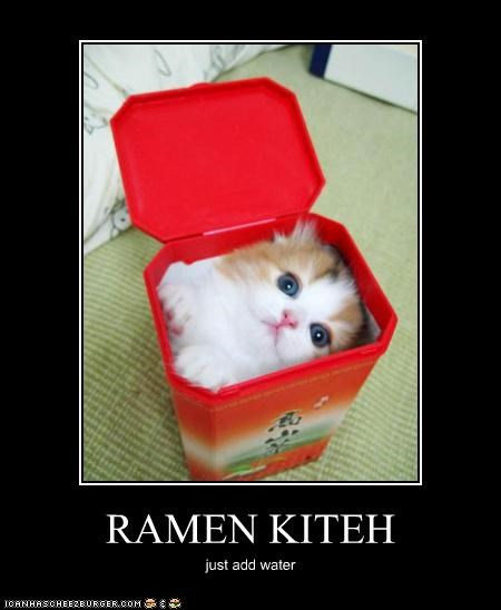 Hall of Fame kitten ramen - 3523602432