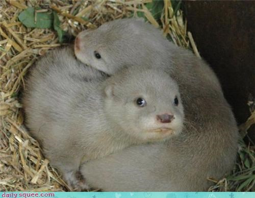 baby otters squee spree - 3523626240