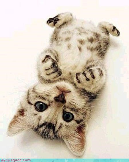 face,kitten,upside down