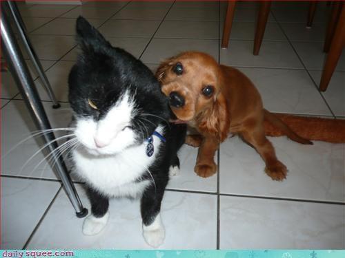 cat,ohana,puppy
