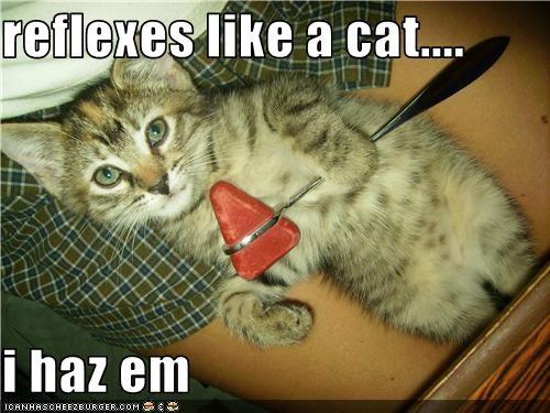 kitten reflexes - 3525244416