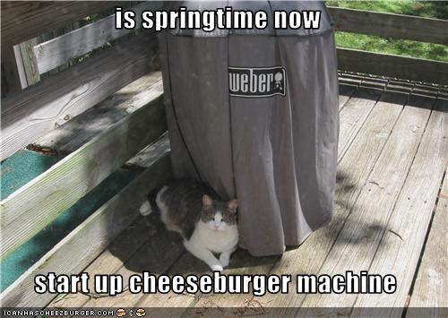 Cheezburger Image 3525267968