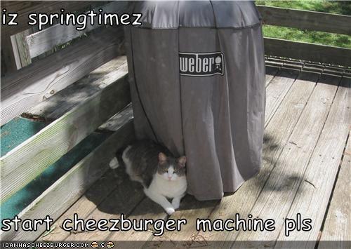 Cheezburger Image 3525788672