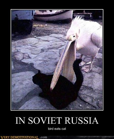 cat bird Soviet Russia - 3525870336