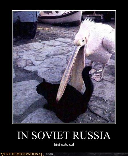 cat bird Soviet Russia - 3525870336