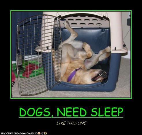 DOGS, NEED SLEEP LIKE THIS ONE