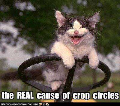crop circles,kitten,plotting