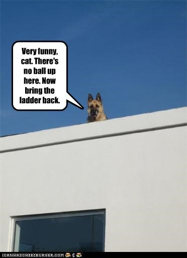 ball,german shepherd,ladder,outside,roof,tricked