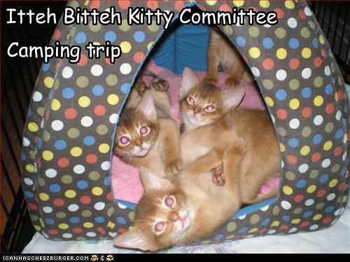Itteh Bitteh Kitty Committee Camping trip