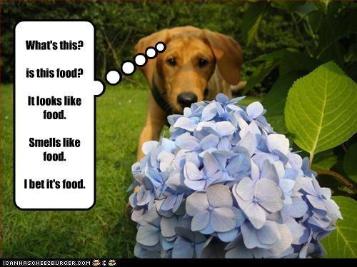 beagle eat Flower food Hall of Fame mistake outside - 3527923200