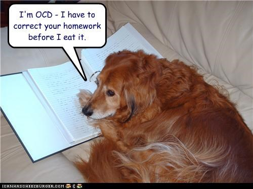 book,correcting,couch,golden retriever,homework,ocd