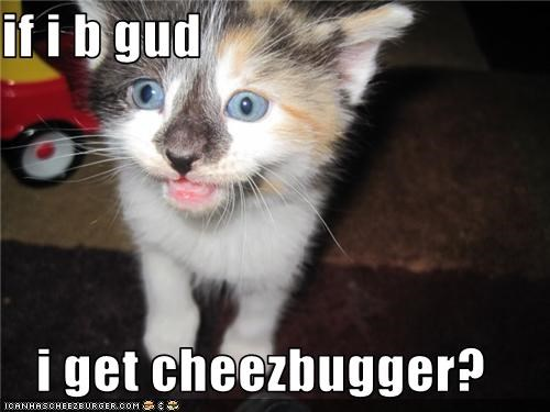 Cheezburger Image 3528310016
