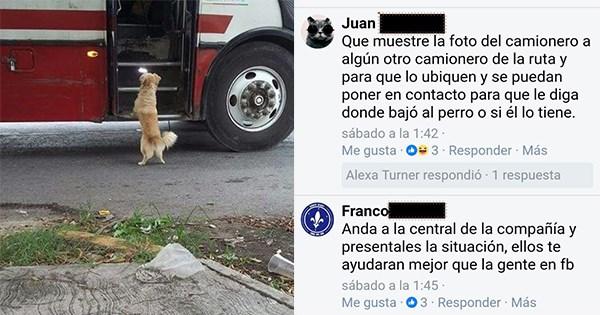 perro se va solo en bus