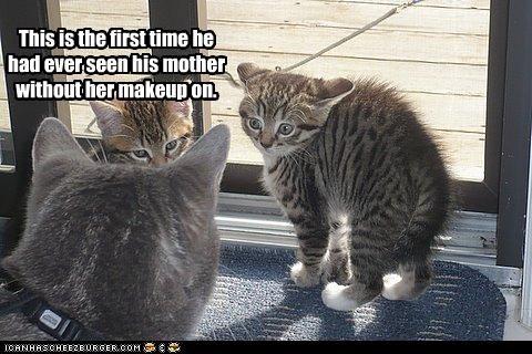 do not want kitten makeup momcat