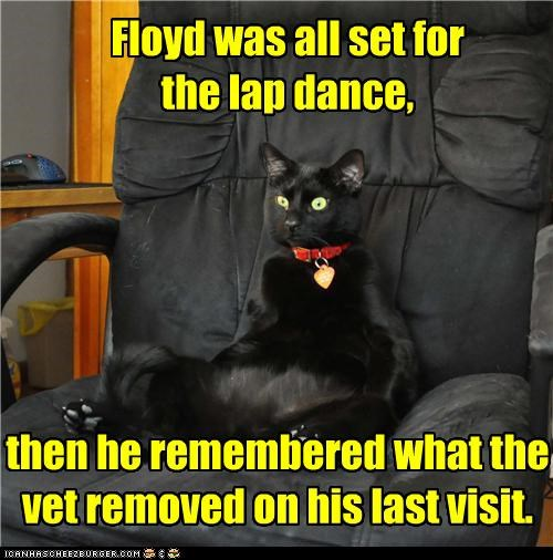 Oh, nuts!!! Floyd was all set for the lap dance, then he remembered what the vet removed on his last visit.