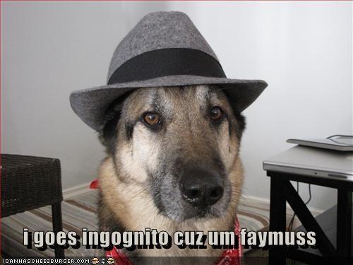 Cheezburger Image 3530235648