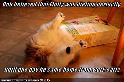 diet fud lying plotting - 3531883008