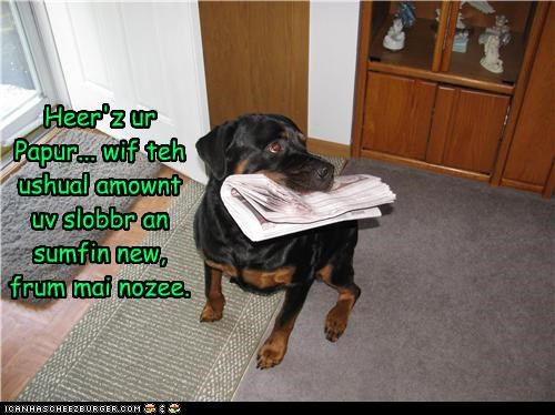 drool fetch paper rottweiler