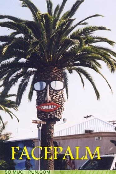 facepalm,groan,nice weather,Palm Tree,sunglasses,sunny,tree